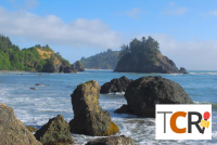 The Cannabis Report brings you the latest industry buzz every week. Trinidad Humboldt County California cannabis